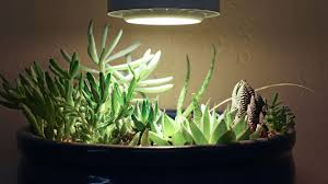 what is the best lighting for growing indoor succulent grow light recommendations mountain crest gardens