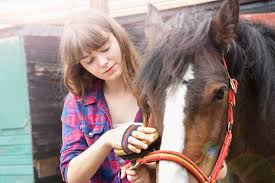sample of photo essay sample common application essay 2 learn from failure teenager grooming horse in front of barn