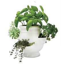 window herb gardens windowsill herb garden kit gifts for gardeners
