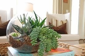 Home Decor Plants Living Room home decoration adorable terrarium plants inside unused glass