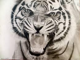 9x12 tiger roar drawing in pencil michaela pinterest tigers