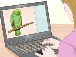 how to take care of your pet 10 steps with pictures wikihow