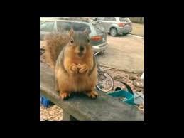 Squirrel Meme - funny squirrel meme youtube