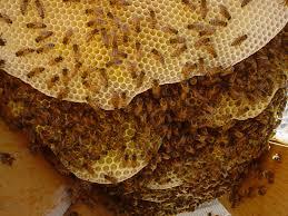 inside a honey bee hive u2013 thehoneybee net