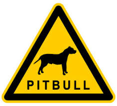 l american pitbull terrier a p b t search photos