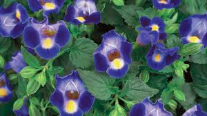 Flowers For Window Boxes Partial Shade - 10 best plants for shade u2014 easy shade loving plants
