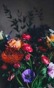 flowers images download free images on unsplash