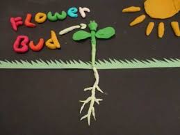 Life Of A Flower - from a seed to a flower youtube