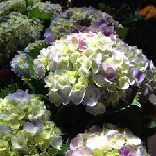 seasonal concepts in redfern sydney nsw florists truelocal