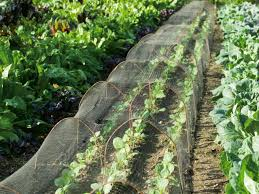 home veggie garden ideas how to plan your small garden best vegetable gardens ideas on
