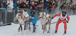 norwegian reindeer racing championships u2013 a lost microbiologist