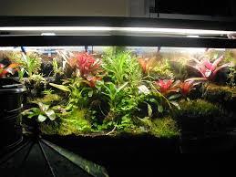 terrariums here u0027s a large glass plant terrariu