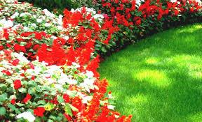 favorable flower fairies official website tags flower website