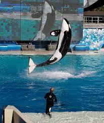 sayonara shamu seaworld to close killer whale show in san diego
