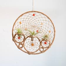 Air Plants 12 Diys To Get Air Plants On Your Wall