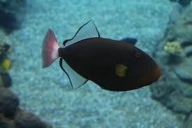 october 20 2012 rainbow reef