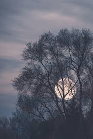 pretty tree beautiful vintage trees moon lovely
