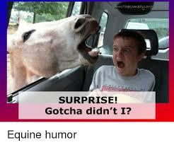 Gotcha Meme - the comedyorg surprise gotcha didn t i equine humor meme on sizzle