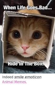 Emoticon Memes - when life goes bad hide in the box indeed smile emoticon animal