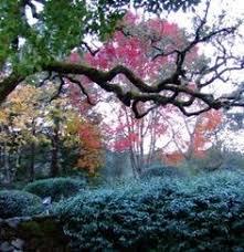 sonoma county northern california brilliant fall color