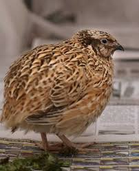 quail a path to preparedness for all types of homes