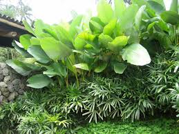 tropical garden ideas garden design ideas post conifer for front yard bbackyardb patio