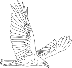 turkey vulture coloring page coloring page