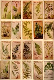 265 best ferns images on pinterest plants gardening and potted