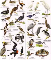 backyard bird identification images reverse search