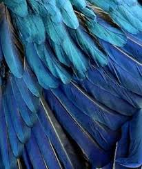 blue feathers love the color just pretty to the eye pinterest