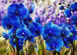 Blue Orchid Flower - blue orchid garden wall art digital art by georgiana romanovna