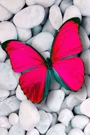 heart fly wallpapers mariposa butterfly insect color things that fly pinterest