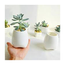 succulent planters with bambootray y u0026m tm elegance ceramic