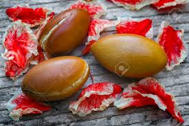 fruit and nut easter eggs argan fruit argania spinosa nutsl this original seed of morocco