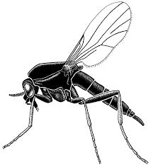 Alabama Travel Bug images No see ums but you feel 39 em bug squad anr blogs jpg