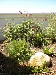 edible california native plants native landscapes home grown edible landscapes