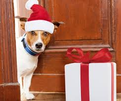 pet presents for every taste and budget