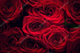 foto bagnate rosse bagnate â foto stock â photocreo 54560835
