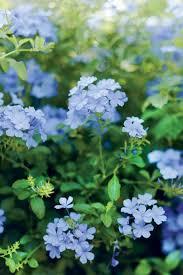 best 25 florida flowers ideas on pinterest florida plants