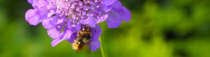 native arkansas plants pollinator plants for arkansas gardens the good earth garden center