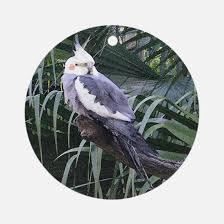 cockatiels ornament cafepress