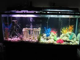 aquariums for home ouida us