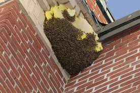 bee removal and control services