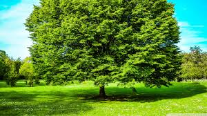 green tree 4k hd desktop wallpaper for 4k ultra hd tv