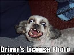 Dog Driving Meme - driver s license photo know your meme
