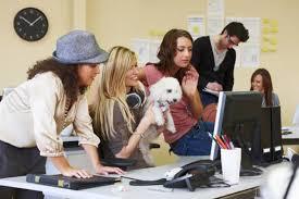 emploi de bureau peut on amener ou chien au bureau emploi