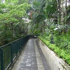 Hong Kong Zoological And Botanical Gardens Hong Kong Zoological And Botanical Gardens Walking Paths