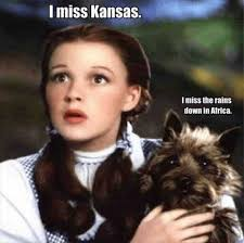 Wizard Of Oz Meme - search results for tag wizard of oz