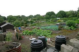 allotment getting started rhs gardening