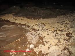 the significance u0026 treatment of mold on dirt in crawl spaces